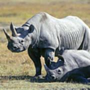 Black Rhinocerous Art Print
