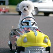 Fifi Goes For A Ride Art Print