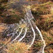 4. Ice Prismatics In Grass 1, Loch Tulla,  Art Print