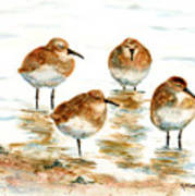 4 Little Pipers Art Print