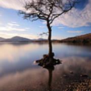 Loch Lomond Tree Art Print