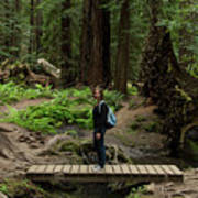 Montgomery Woods State Natural Reserve Art Print
