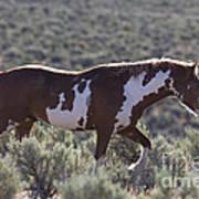Mustang Stallion Art Print