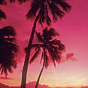 Palms Against Pink Sunset Art Print