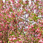 Pink Cherry Tree Art Print
