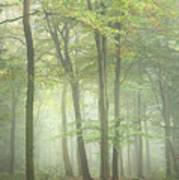 Stunning Colorful Vibrant Evocative Autumn Fall Foggy Forest Lan Art Print
