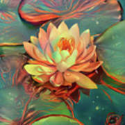 Teal And Peach Waterlilies Art Print