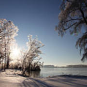 Trees In Ice Series Art Print