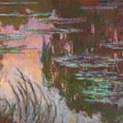 Water Lilies, Setting Sun Art Print