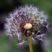 Weed Seeds Art Print