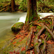 Whatcom Creek Art Print