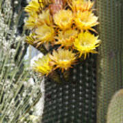 Yellow Cactus Flowers Art Print