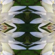 White Lotus Mandala Art Print