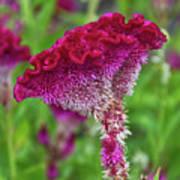 4393- Flower Art Print