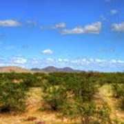 Sonora Desert Art Print