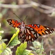 4529 - Butterfly Art Print