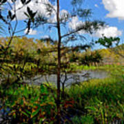 49- Florida Everglades Art Print