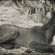 Wild Mustangs Art Print