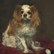 A King Charles Spaniel Art Print