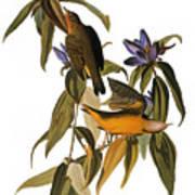 Audubon: Warbler, (1827-38) Print by Granger