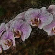 5 Dollar Orchid Art Print