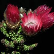 Exotic Flower Art Print
