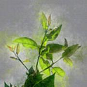 Fresh Growth Of Healthy Green Leafs  Art Print