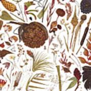 Herbarium Specimen Art Print