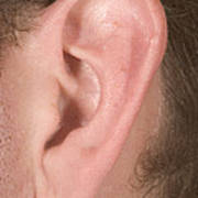 Human Ear Art Print