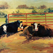 5 O Clock Cows Art Print