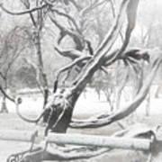Park During Heavy Snowfall  Art Print
