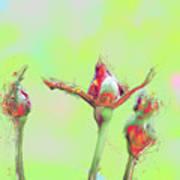 Red Rose Bud Art Print