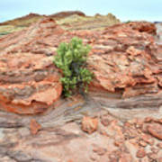 Sandstone Color In Valley Of Fire Art Print