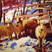 5 Sheep Art Print