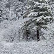 Snowstorm In The Pike National Forest Art Print