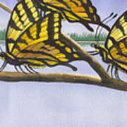 5 Swallowtails Art Print
