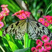 5050- Butterfly Art Print