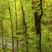 North Carolina Fall Colors Art Print