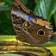 5113- Butterfly Art Print