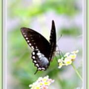 5276-001- Butterfly - Swallowtail Art Print