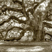 Angel Oak Live Oak Tree Art Print by Dustin K Ryan