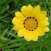 Australia - Daisy With Yellow Petals Art Print