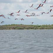 Colombia Sanctuary Of Flamingos Near Riohacha Art Print