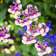 Flowering Garden.  Art Print