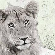 lioness Masai Mara, Kenya Art Print