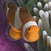 Malaysia, Marine Life Art Print