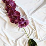 Silk Flower Art Print
