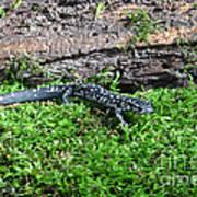 Slimy Salamander Art Print