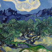 The Olive Trees Art Print