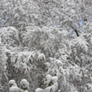 Snow And Branches Art Print
